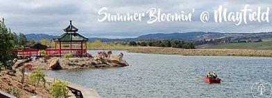 Summer Bloomin Mayfield Garden Blue Mountains News Fresh Air Daily